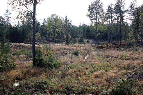 Såhär ser hösten ut i den småländska skogen